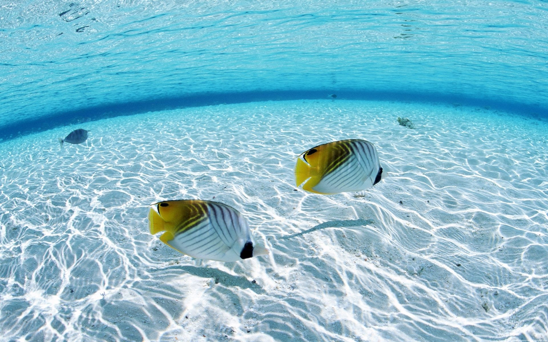underwater | underwater) – wallpapers4desktop 021 | colors