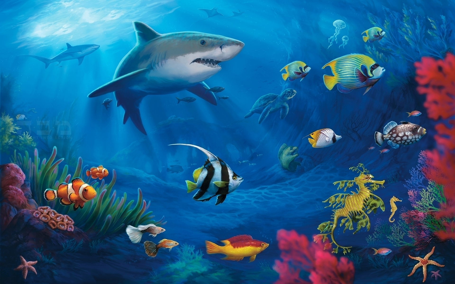 underwater world hd wallpaper. - media file | pixelstalk