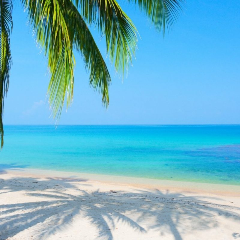 10 Top Beach And Palm Tree Wallpaper FULL HD 1920×1080 For PC Background 2018 free download %name