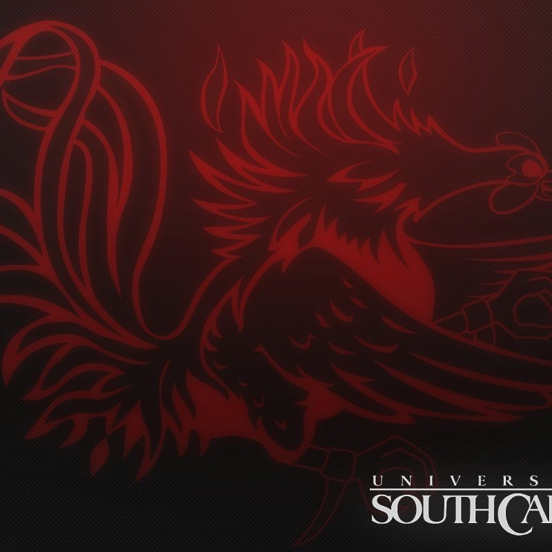 10 Top University Of South Carolina Wallpaper FULL HD 1080p For PC Background 2021 free download university of south carolina screensavers south carolina gamecocks 800x800