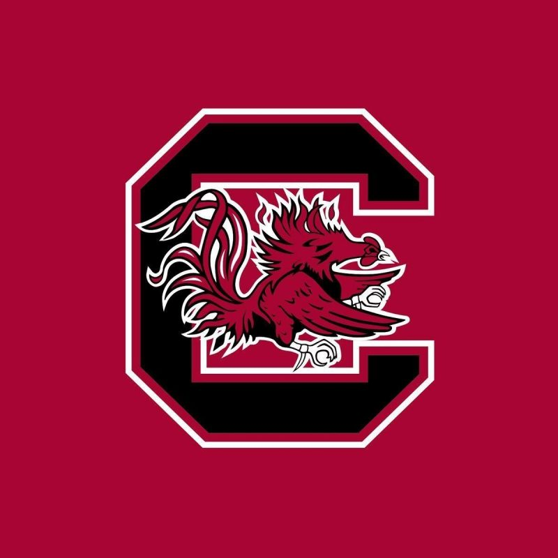 10 Top University Of South Carolina Wallpaper FULL HD 1080p For PC Background 2021 free download university of south carolina wallpapers wallpaper cave 800x800