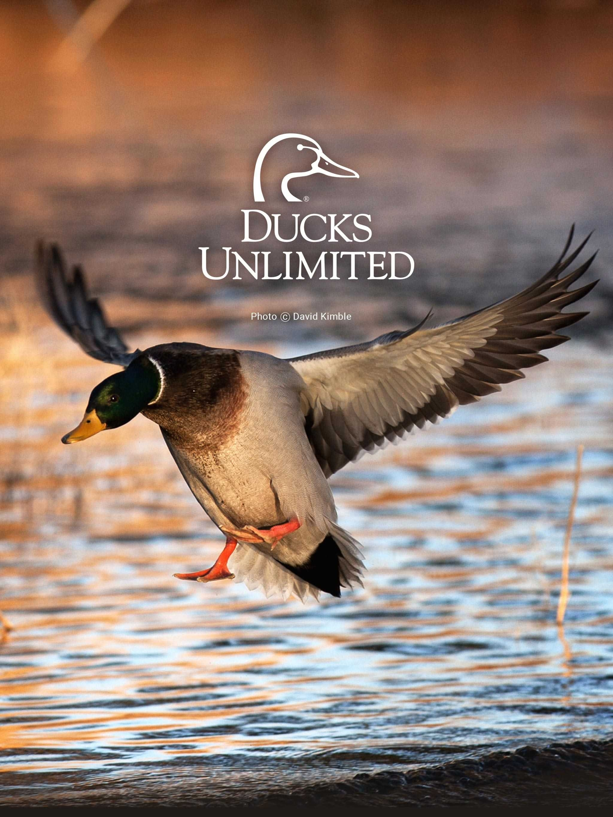 unlimited mobile backgrounds duck hunting wallpaper for phones hd