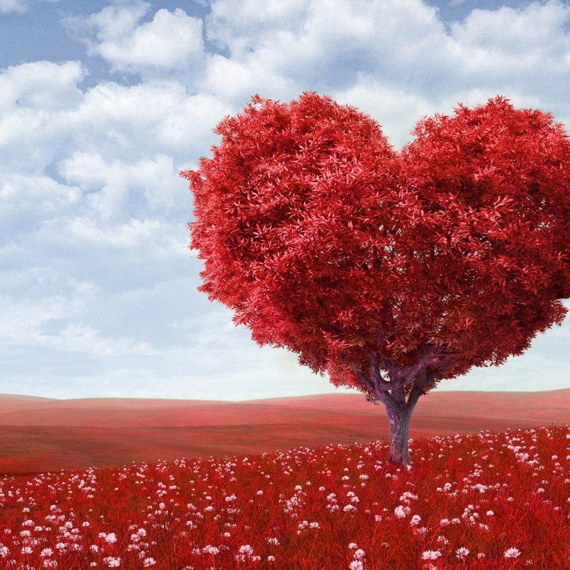 10 Top Valentines Wallpaper For Desktop FULL HD 1920×1080 For PC Desktop 2020 free download valentines day 2014 e29da4 4k hd desktop wallpaper for 4k ultra hd tv 800x800