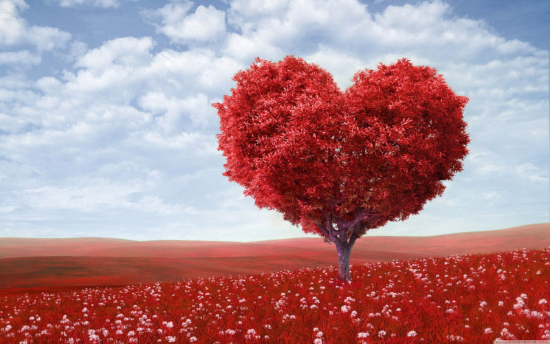 10 Most Popular Free Valentine Desktop Backgrounds FULL HD 1920×1080 For PC Desktop 2020 free download valentines day desktop wallpapers top free valentines day 800x500