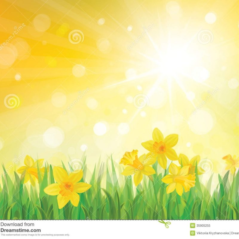 10 New Spring Background Images Free FULL HD 1920×1080 For PC Desktop 2018 free download vector of daffodil flowers on spring background stock vector 1 800x800