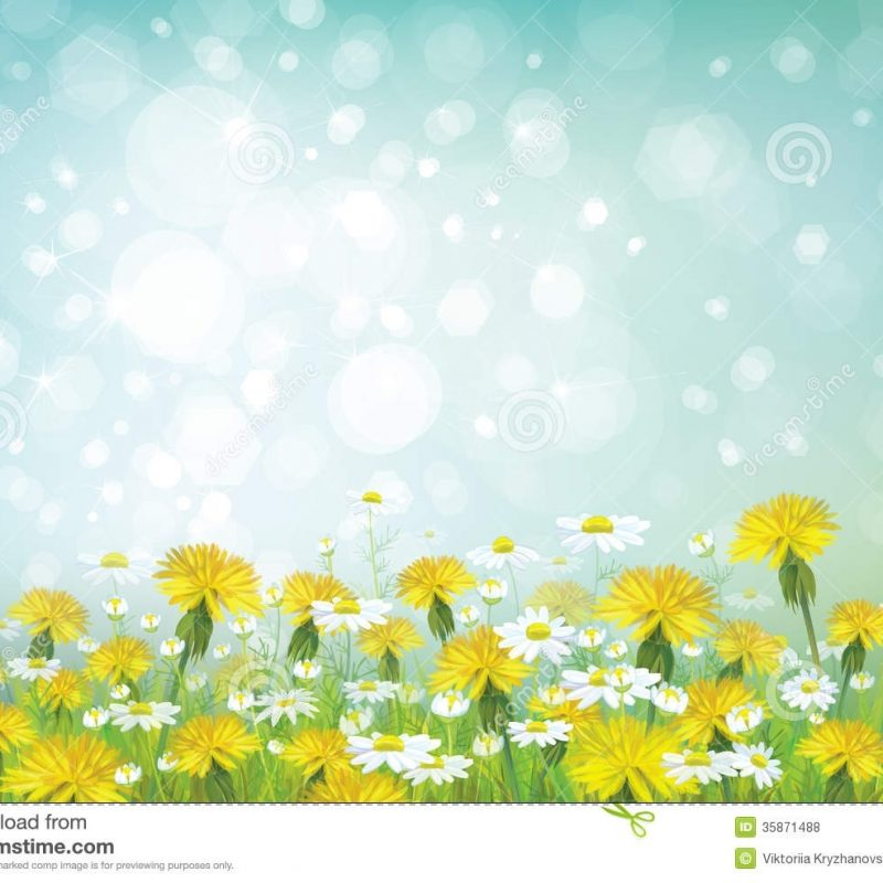 10 Best Free Spring Background Images FULL HD 1080p For PC Desktop 2018 free download vector spring background with chamomiles and dande stock vector 800x800