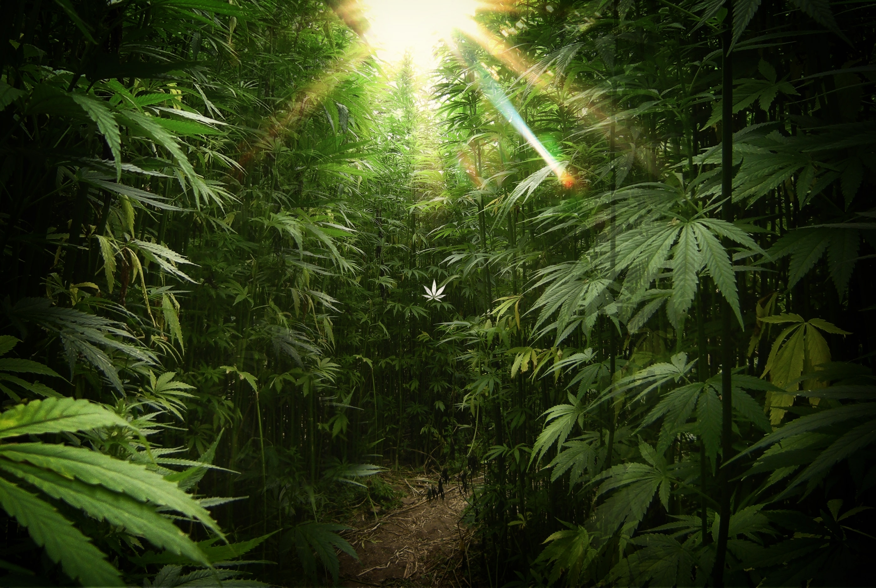 vg:33 - weed wallpapers, 100% quality hd awesome weed pics collection