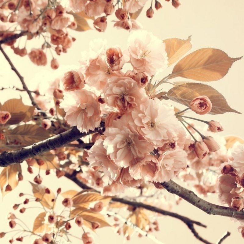10 Best Vintage Spring Desktop Background FULL HD 1920×1080 For PC Background 2018 free download vintage desktop wallpapers vintage desktop wallpaper desktop 800x800