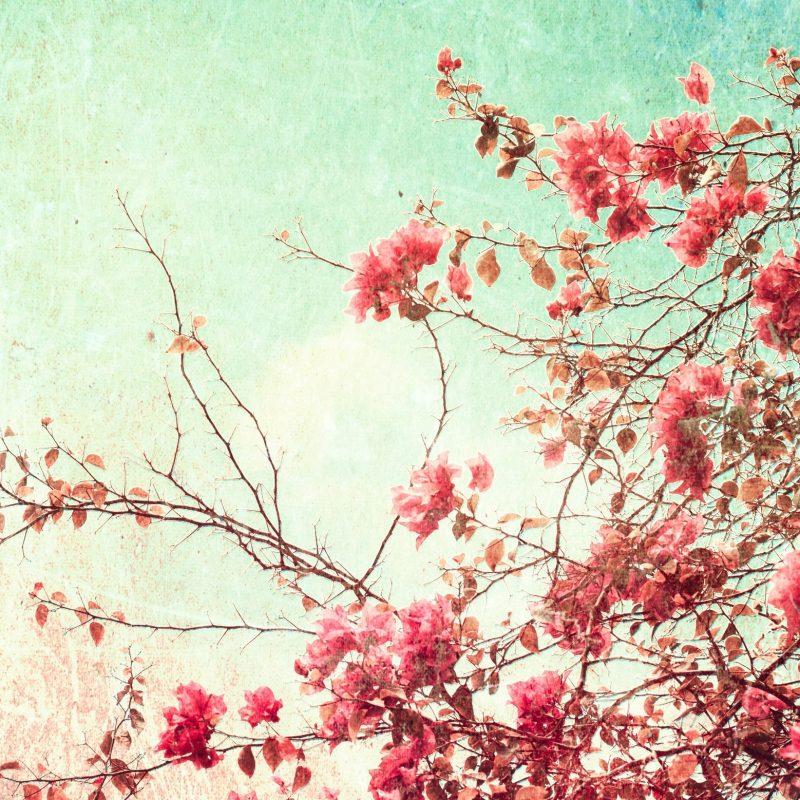 10 Most Popular Desktop Wallpaper Flowers Vintage FULL HD 1920×1080 For PC Background 2018 free download vintage flowers images hd wallpapers beautiful images hd pictures 1 800x800