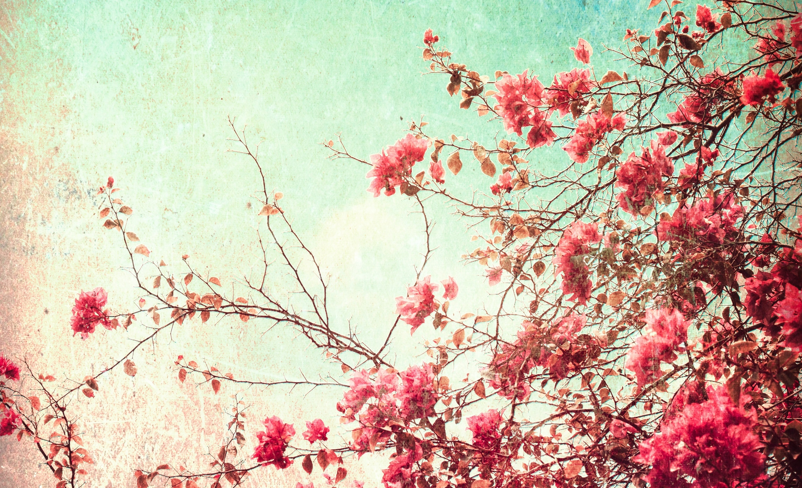 vintage flowers images hd wallpapers | beautiful images hd pictures