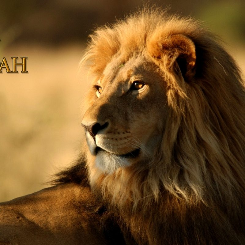 10 Best Lion Of Judah Image FULL HD 1920×1080 For PC Desktop 2020 free download vision lion of judah soj ministries 800x800