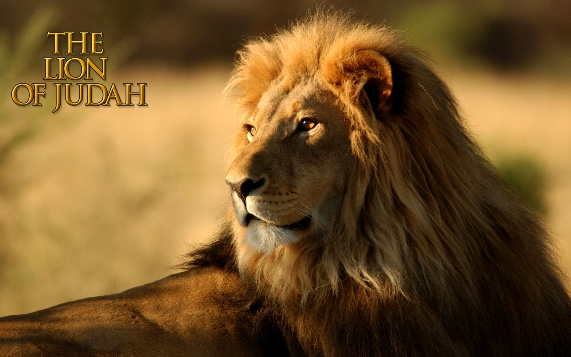 vision: lion of judah - soj ministries