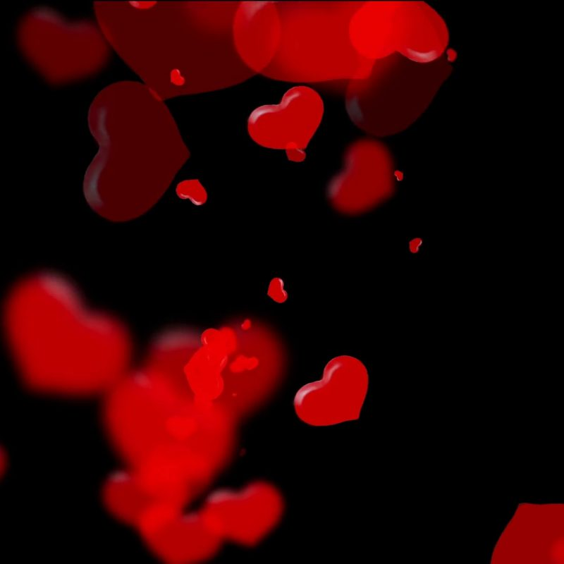 10 Latest Red Heart Black Background FULL HD 1080p For PC Desktop 2020 free download vivid translucent red hearts on black background valentines day 800x800