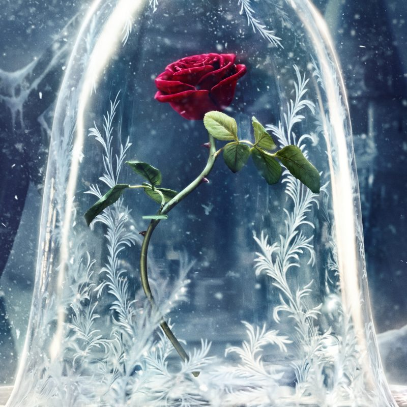10 Best Beauty And The Beast Wallpaper FULL HD 1920×1080 For PC Background 2021 free download wallpaper beauty and the beast 2017 movies disney rose movies 1261 800x800