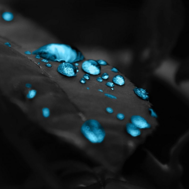 10 Best Black Blue Wallpaper Hd FULL HD 1920×1080 For PC Background 2020 free download wallpaper blue drops in a black leaf 1920 x 1080 full hd 1920 x 4 800x800