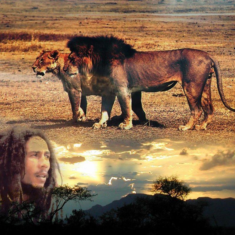 10 New Bob Marley Lion Wallpaper FULL HD 1080p For PC Desktop 2021 free download wallpaper bob marley musique fond decran 800x800