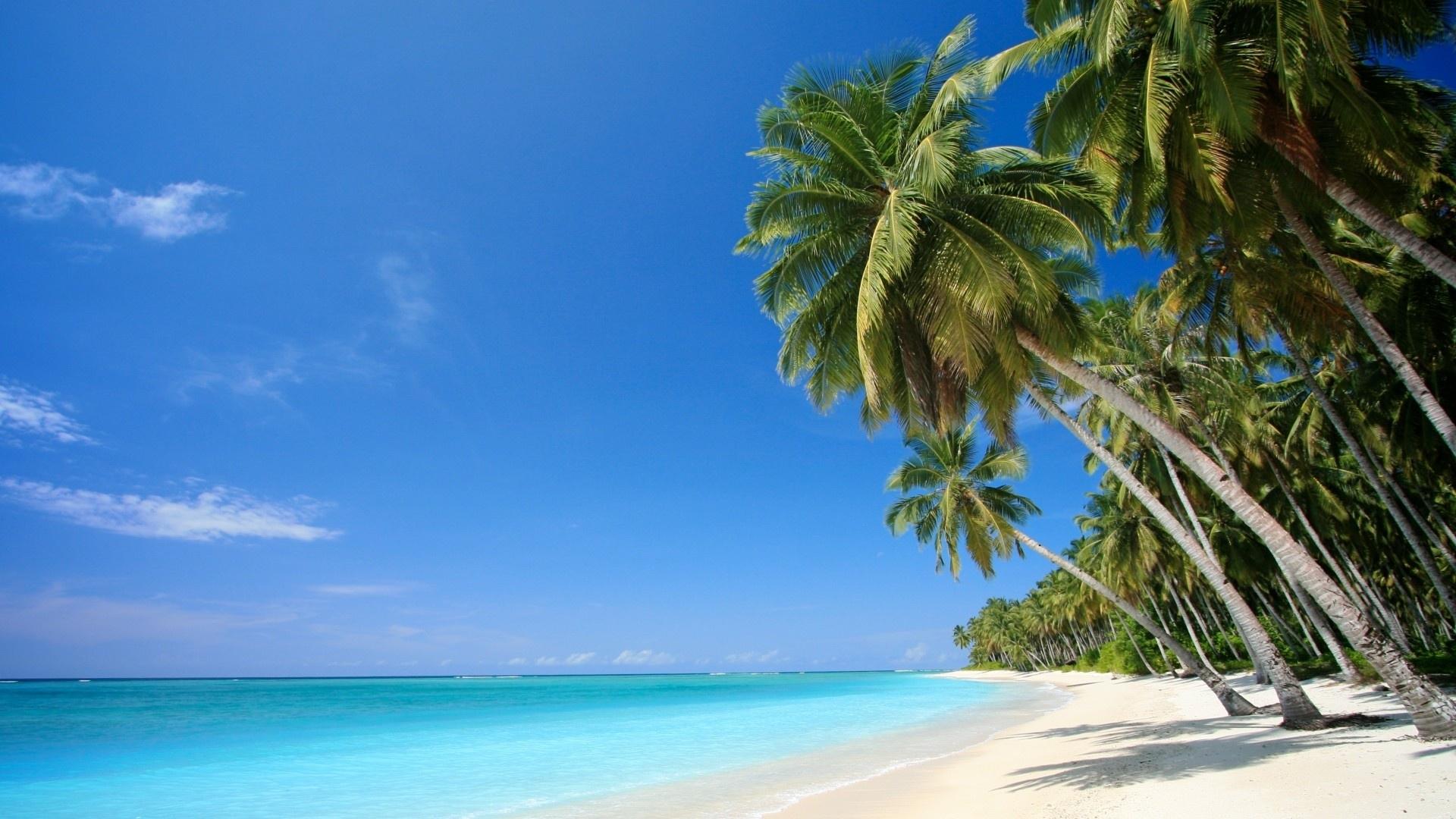 wallpaper caribbean sea, palm, beach, sea, caribbean desktop
