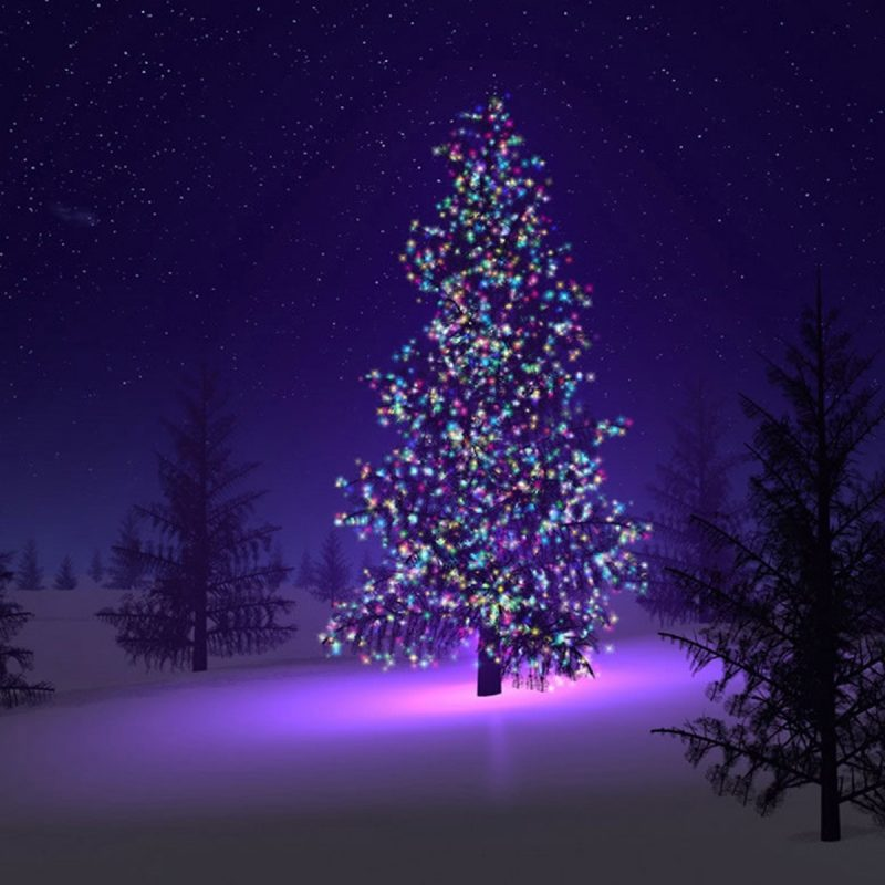 10 Best Free Christmas Trees Wallpaper FULL HD 1080p For PC Desktop 2020 free download wallpaper christmas trees wallpapers 800x800