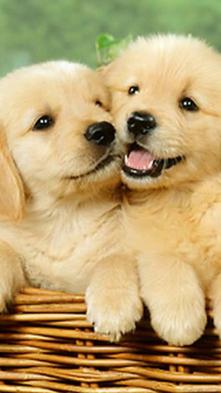 10 Latest 3D Puppy Wallpaper FULL HD 1920×1080 For PC Background 2018 free download wallpaper cute puppies iphone 2019 3d iphone wallpaper 450x800