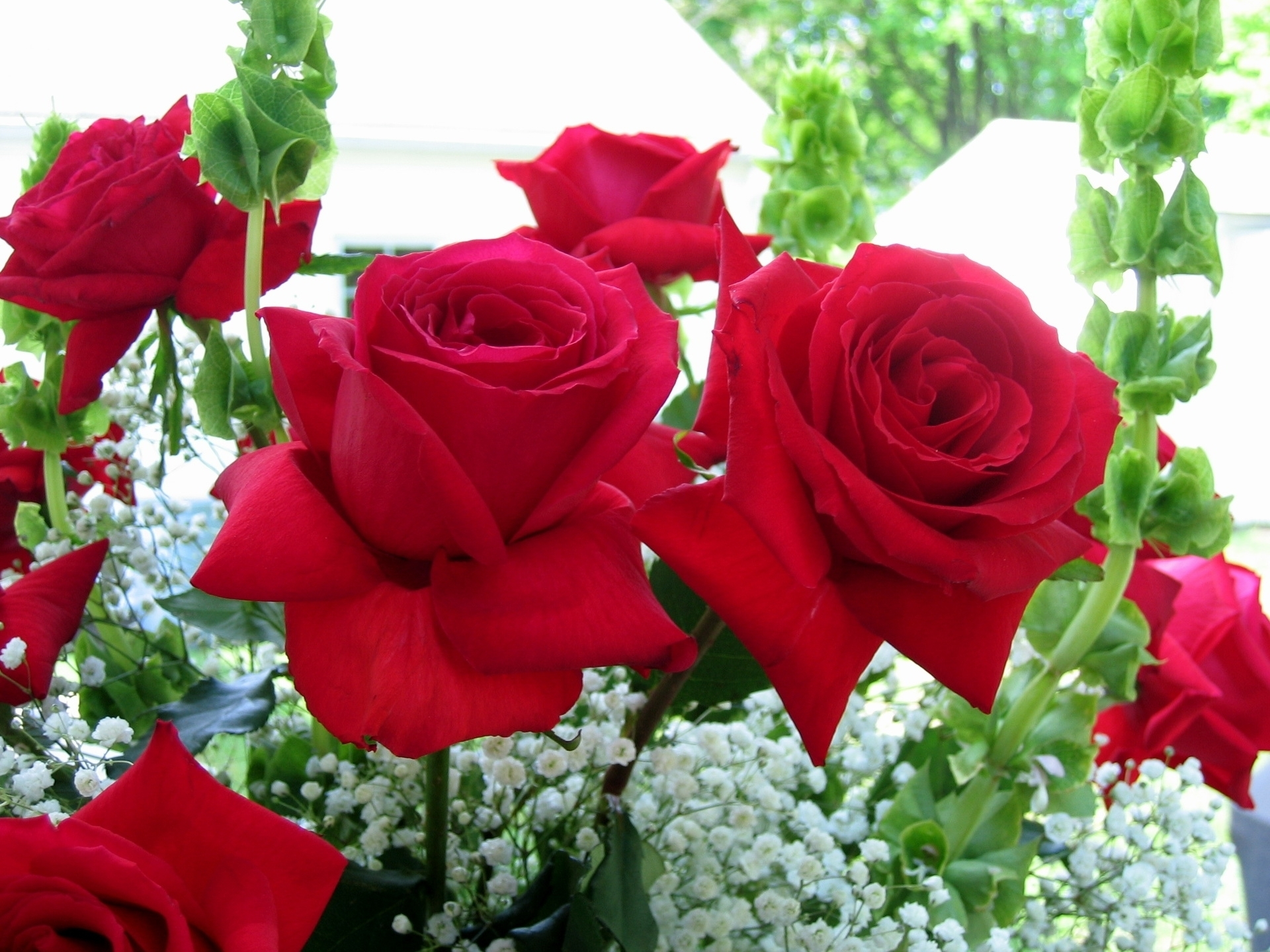 wallpaper desktop backgrounds and roses hd of laptop photos for