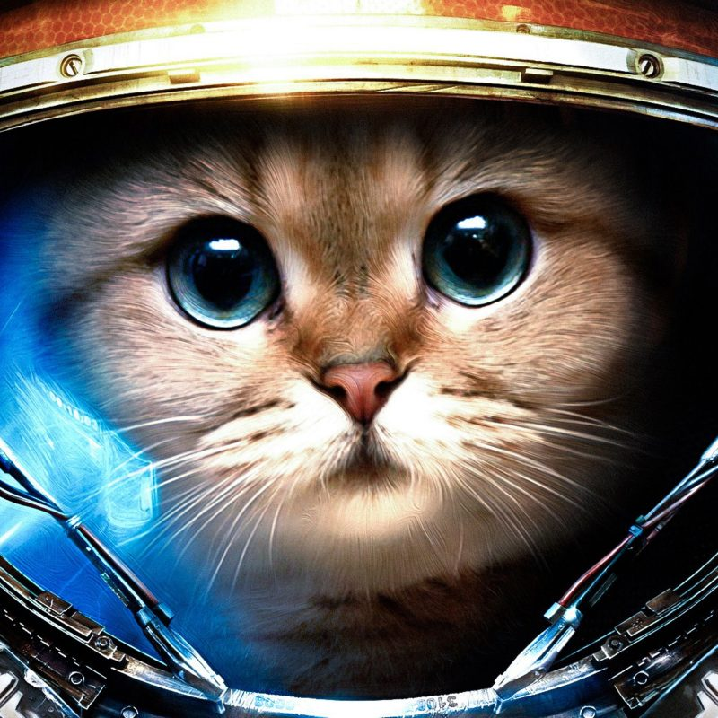 10 New Cat Wallpaper For Computer FULL HD 1080p For PC Background 2020 free download wallpaper download 5120x3200 cat from space animal wallpapers hd 800x800