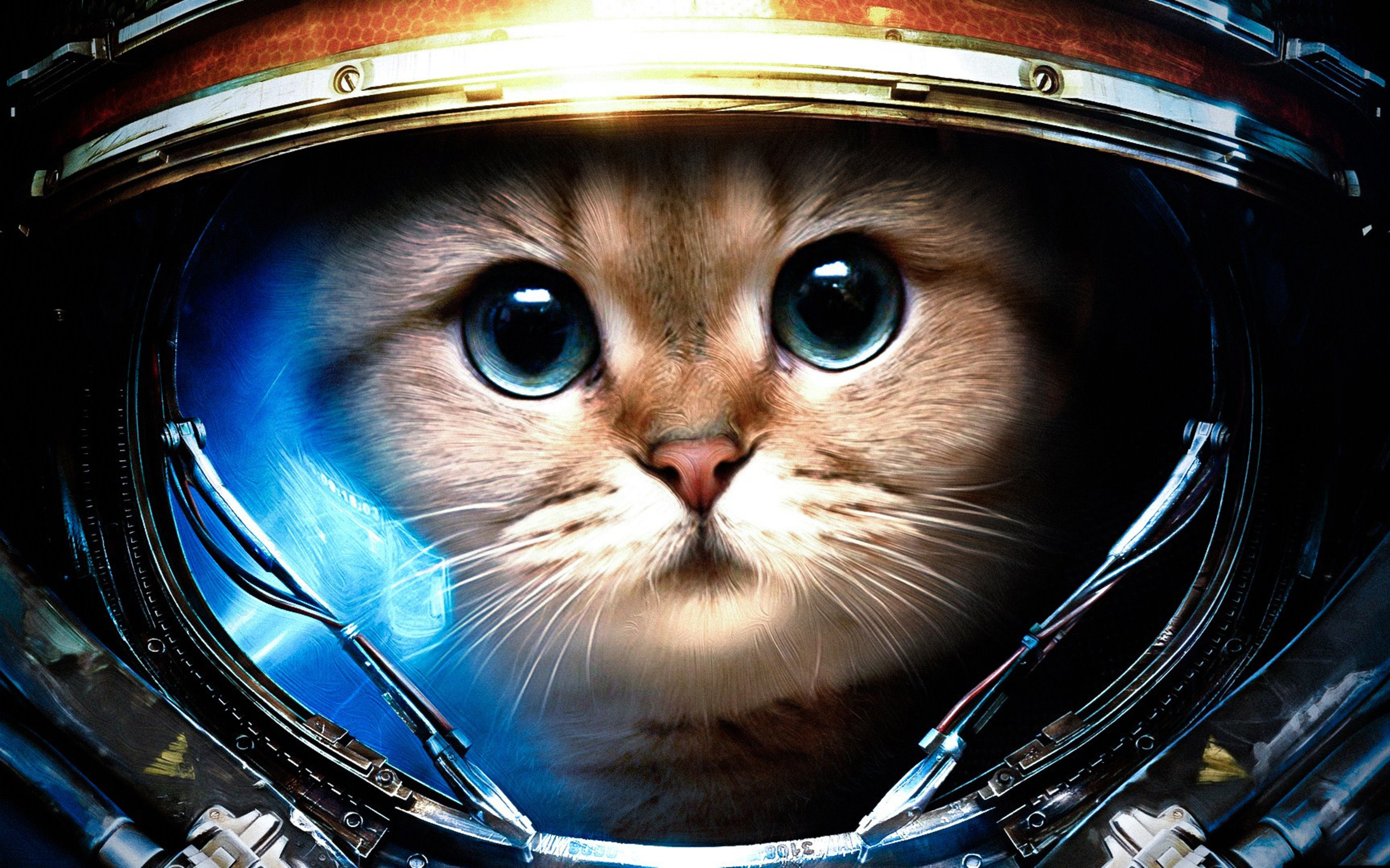 wallpaper download 5120x3200 cat from space. animal wallpapers. hd