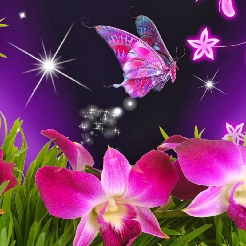 10 Most Popular Wallpapers Butterfly Free Download FULL HD 1080p For PC Background 2020 free download wallpaper flowers and butterflies beautiful flowers and 800x800