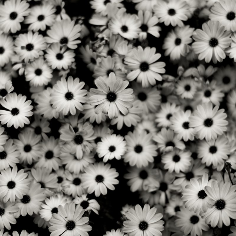 10 Top Black And White Computer Backgrounds FULL HD 1080p For PC Background 2020 free download wallpaper flowers pattern grey daisies daisy tree flower 800x800