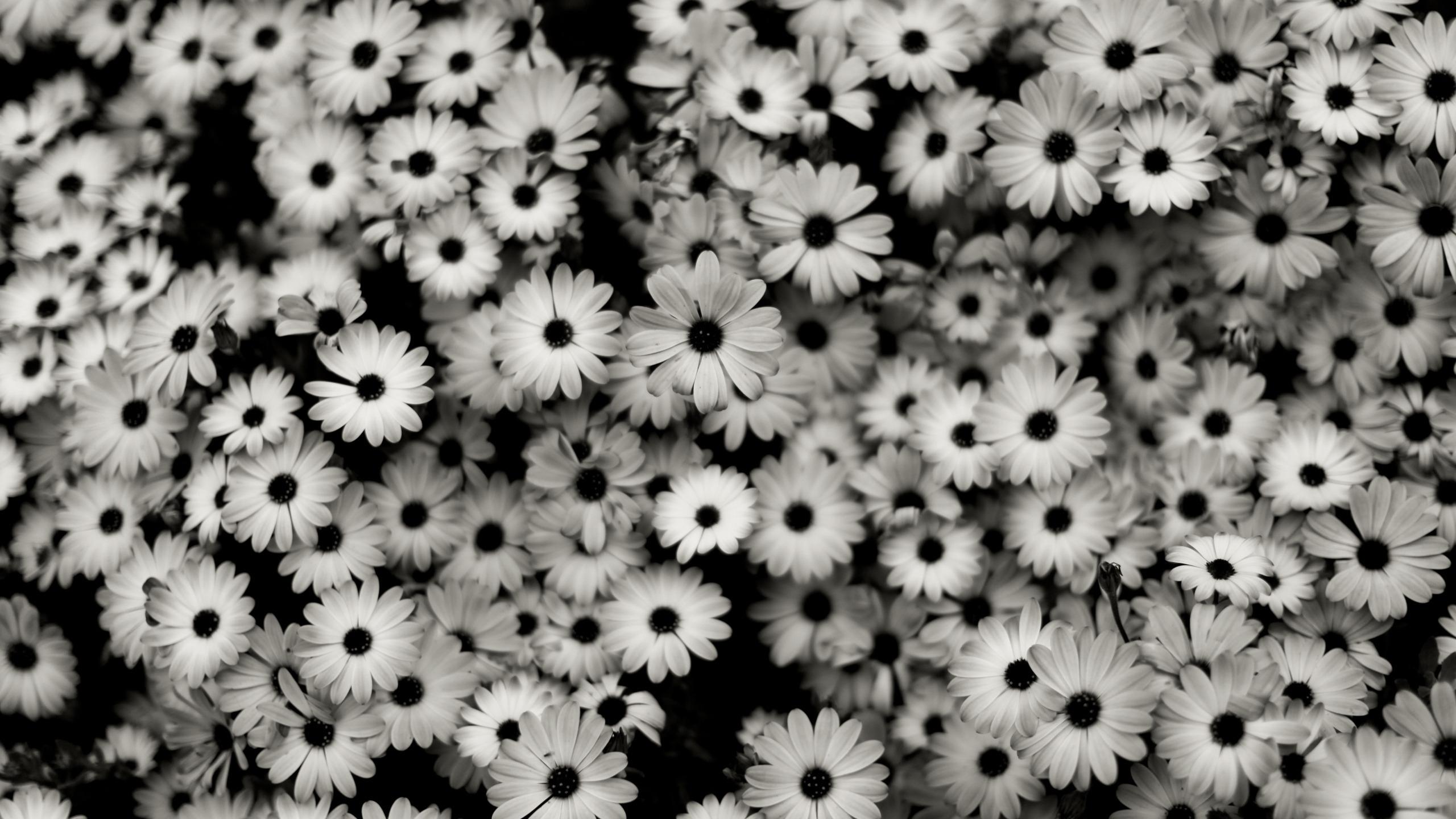 wallpaper : flowers, pattern, grey, daisies, daisy, tree, flower