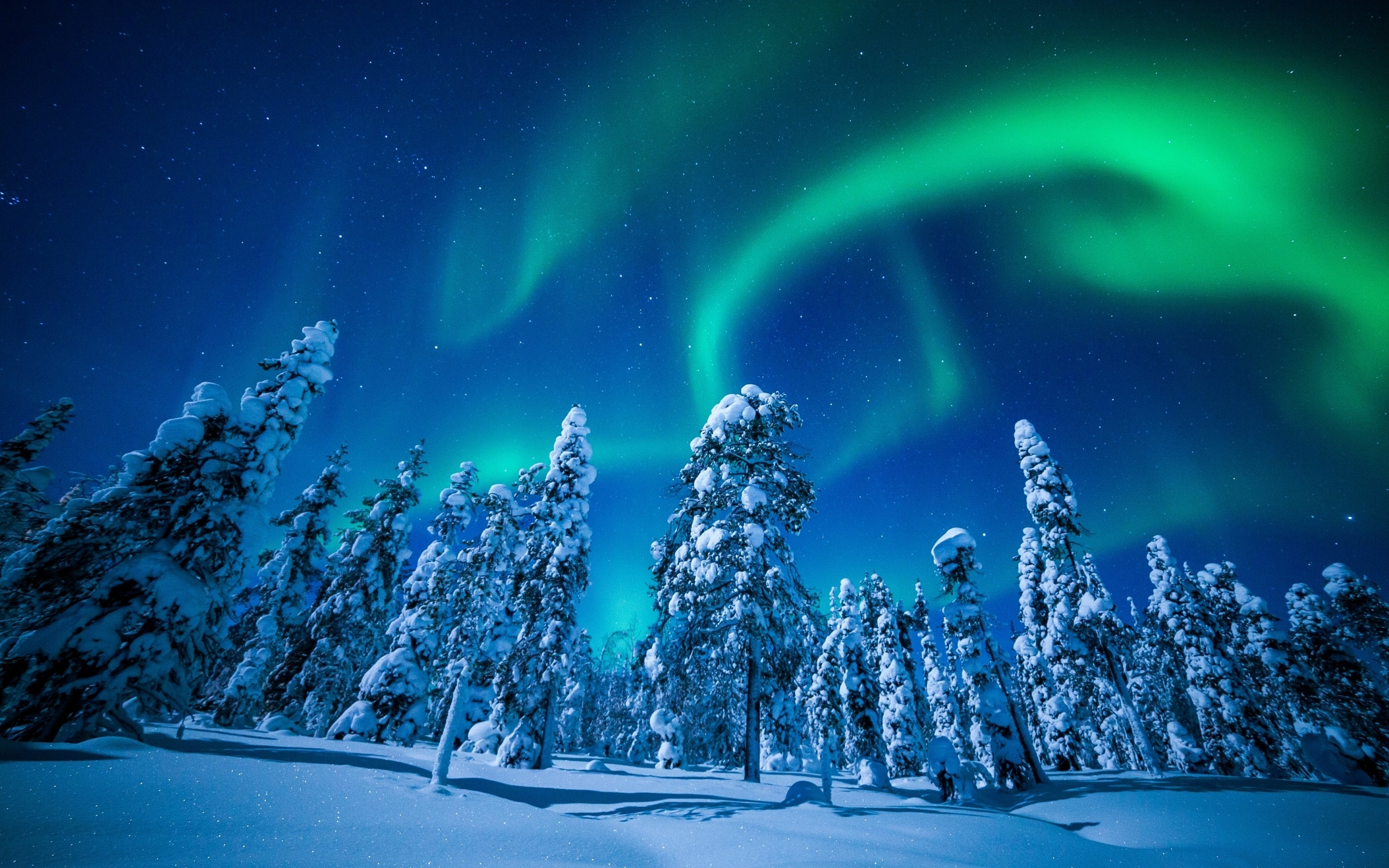 wallpaper forest, winter, frosted trees, aurora borealis, northern