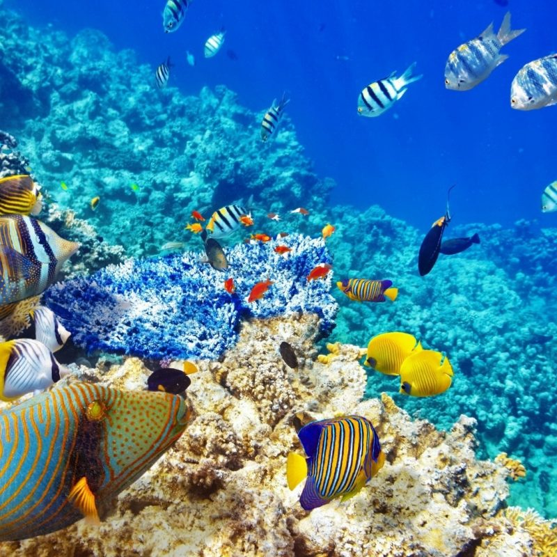 10 Most Popular Coral Reef Hd Wallpaper FULL HD 1920×1080 For PC Desktop 2021 free download wallpaper hd quality underwater world ocean coral reef tropical 800x800
