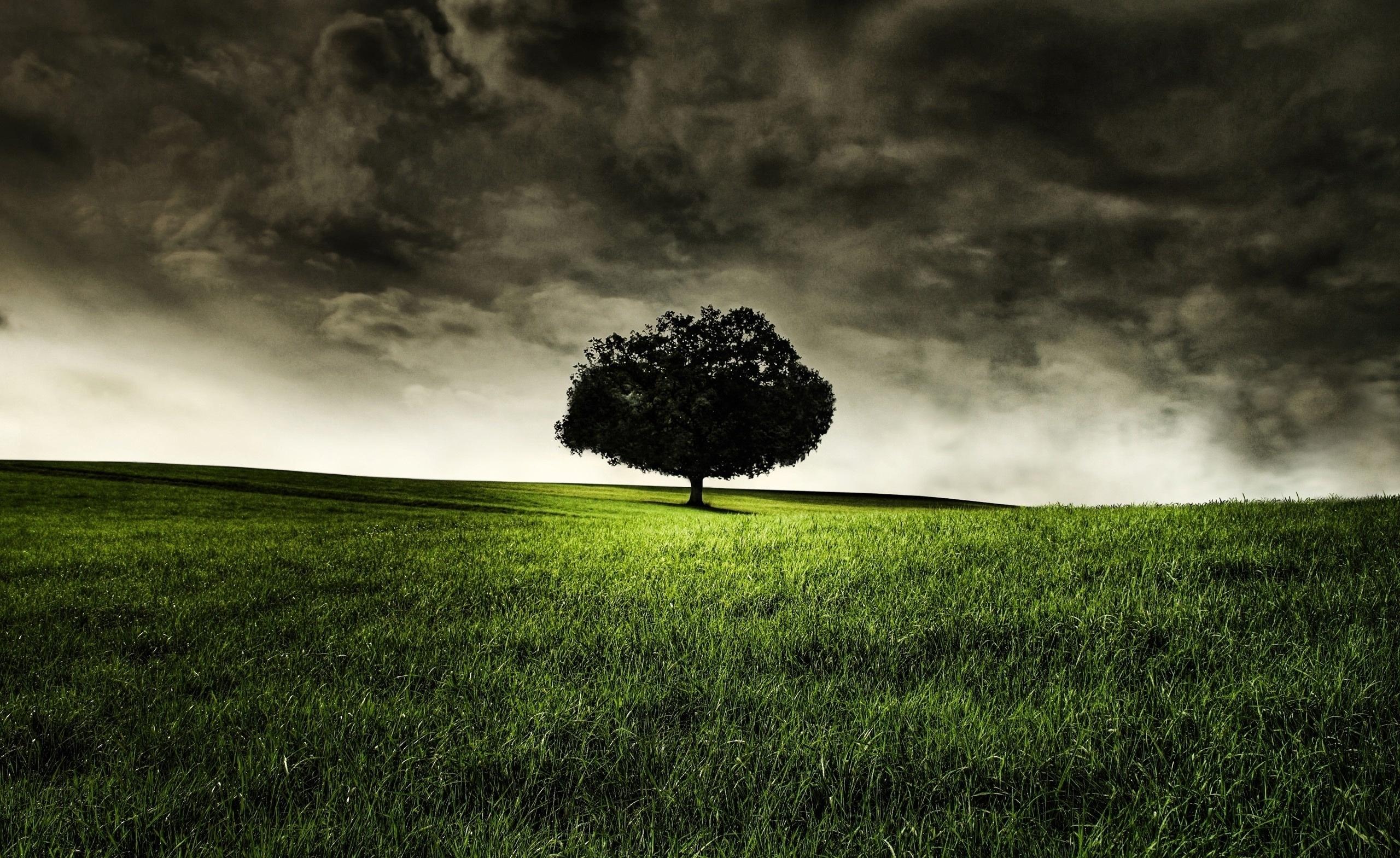 wallpaper hill, field, tree, clouds, dark clouds, grass desktop