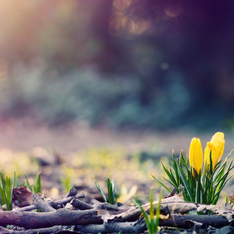10 Most Popular Hd Spring Wallpaper 1080P FULL HD 1080p For PC Desktop 2020 free download wallpaper nature spring desktop i hd images 800x800