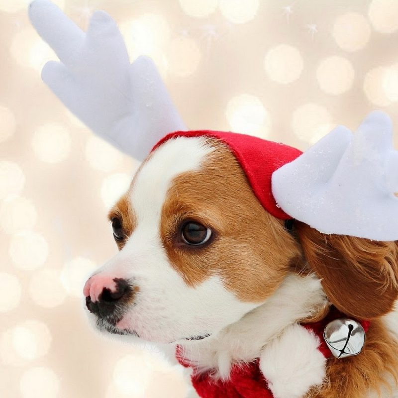 10 Best Cute Animal Christmas Wallpaper FULL HD 1080p For PC Background 2018 free download wallpaper of a cute christmas dog trends wallpaper 800x800