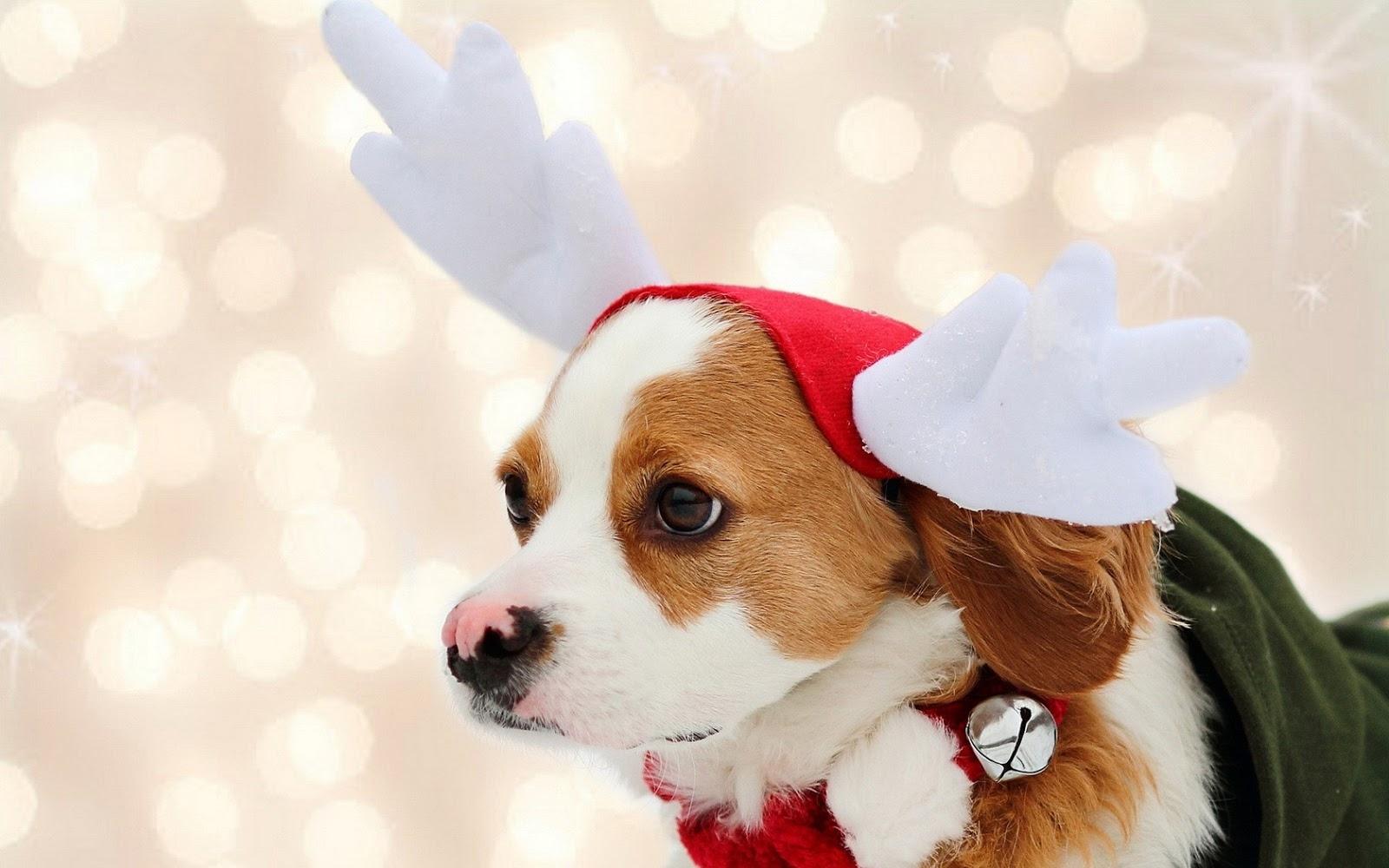 wallpaper of a cute christmas dog ~ trends wallpaper