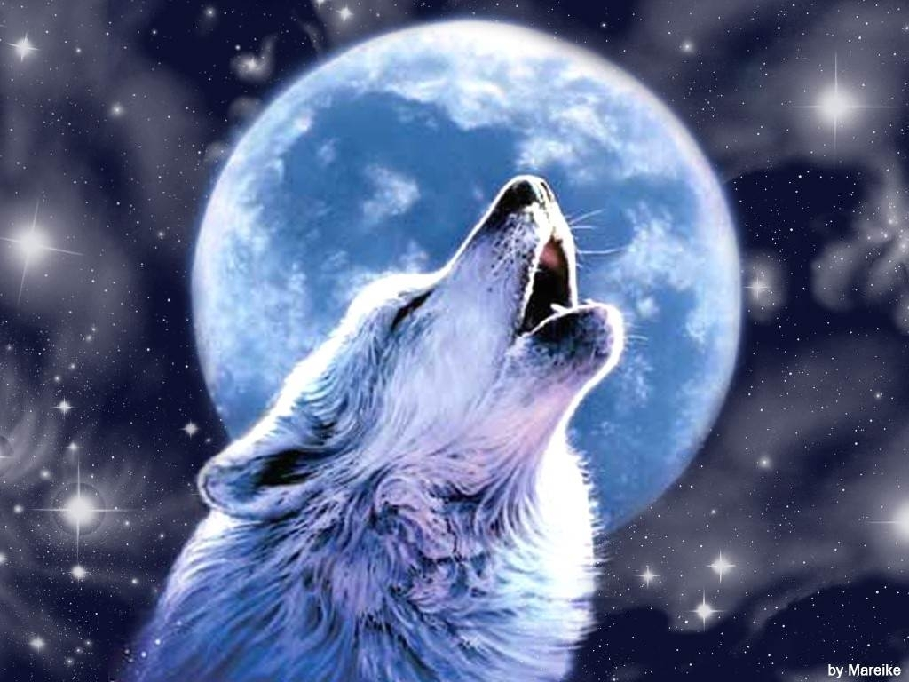 10 New Cool Backgrounds Hd Music Full Hd 1920 1080 For Pc: 10 New Cool Wallpapers Of Wolves FULL HD 1920×1080 For PC