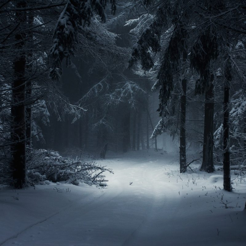 10 Latest Winter Forest Hd Wallpaper FULL HD 1920×1080 For PC Background 2020 free download wallpaper sunlight trees landscape forest nature snow winter 800x800