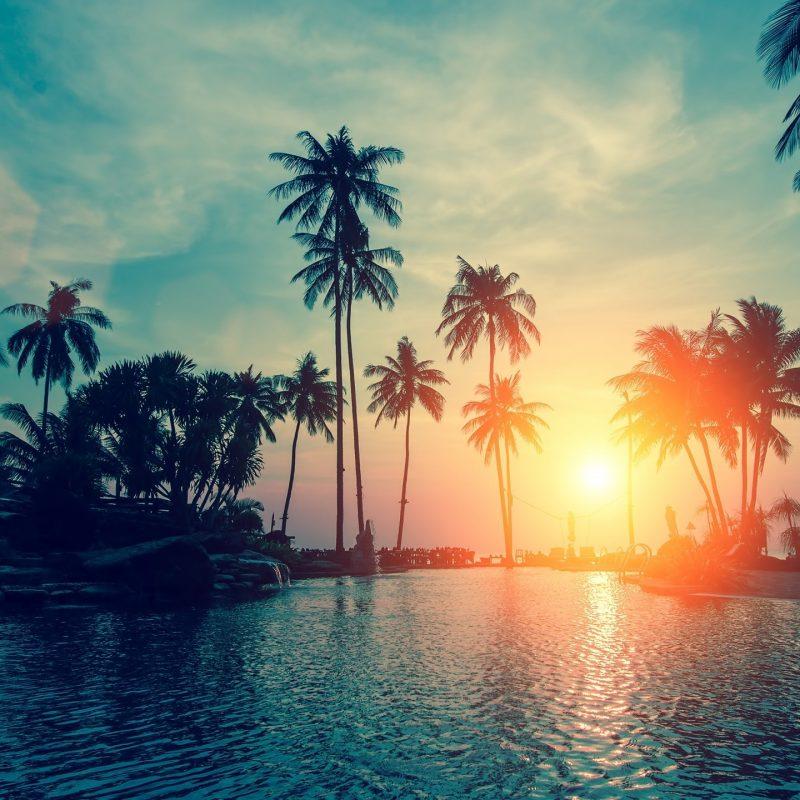 10 Best Palm Trees Desktop Wallpaper FULL HD 1080p For PC Desktop 2018 free download wallpaper sunset palm trees tropical beach hd nature 6500 800x800