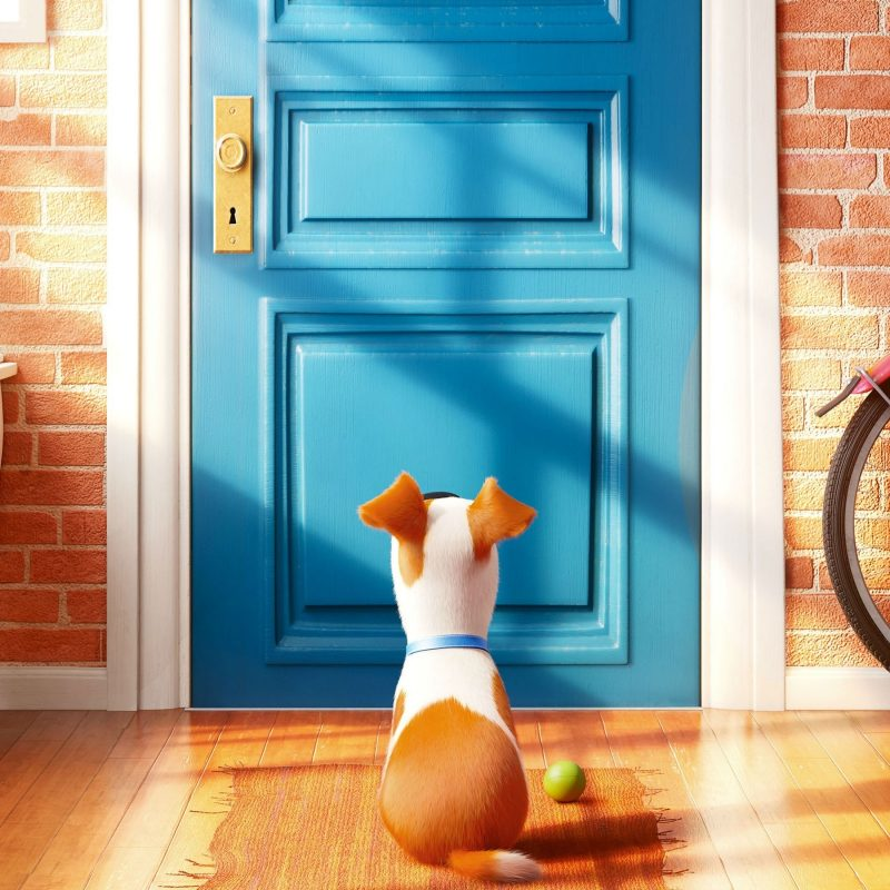 10 Most Popular The Secret Life Of Pets Wallpaper FULL HD 1920×1080 For PC Desktop 2018 free download wallpaper the secret life of pets best animation movies of 2016 800x800