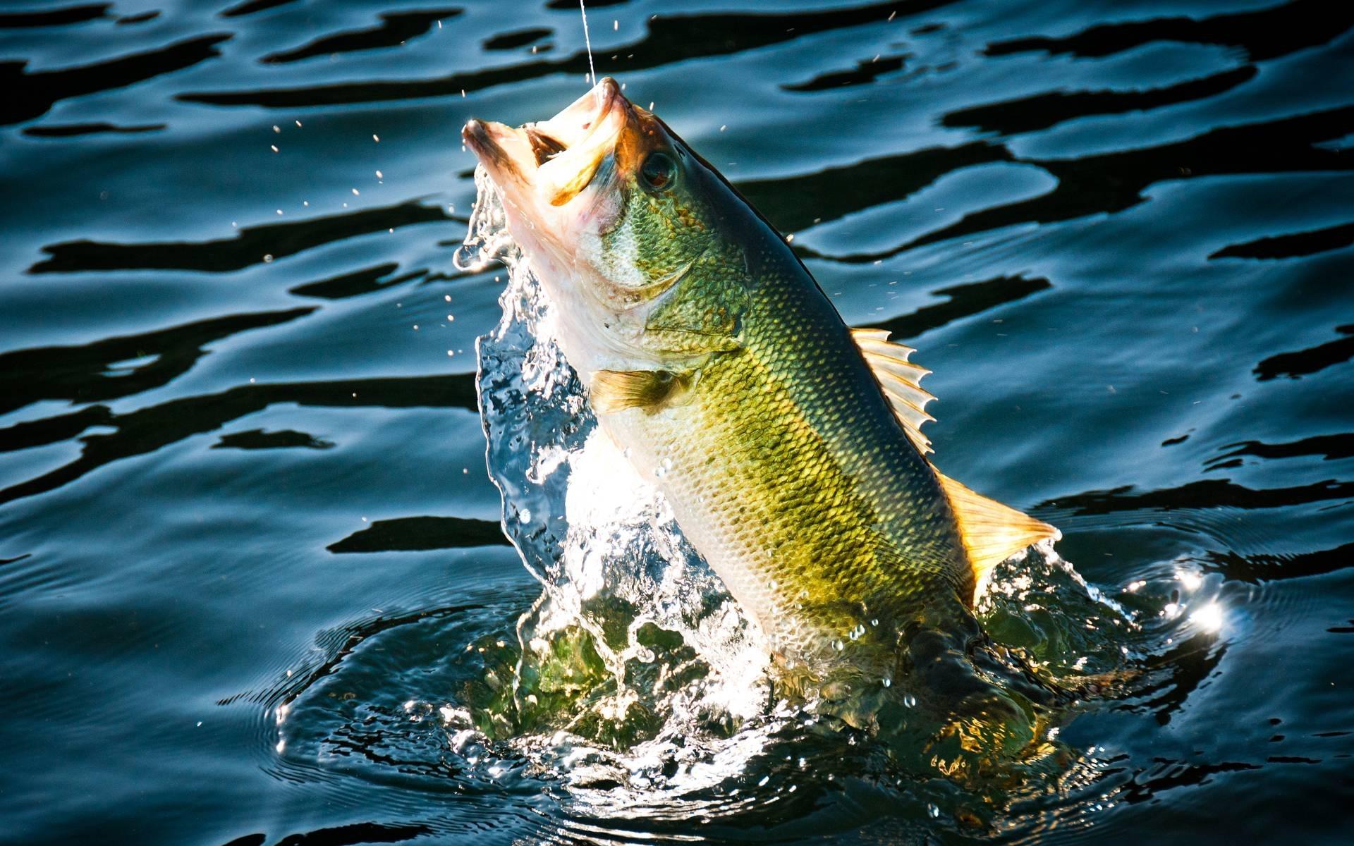 wallpaper.wiki-bass-fishing-wallpaper-widescreen-pic-wpc009880