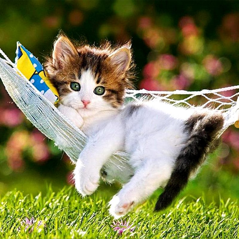 10 Top Kitten Wallpapers Free Download FULL HD 1920×1080 For PC Background 2018 free download wallpaper wiki beautiful creative cute cat kitty kitten with flowers 800x800