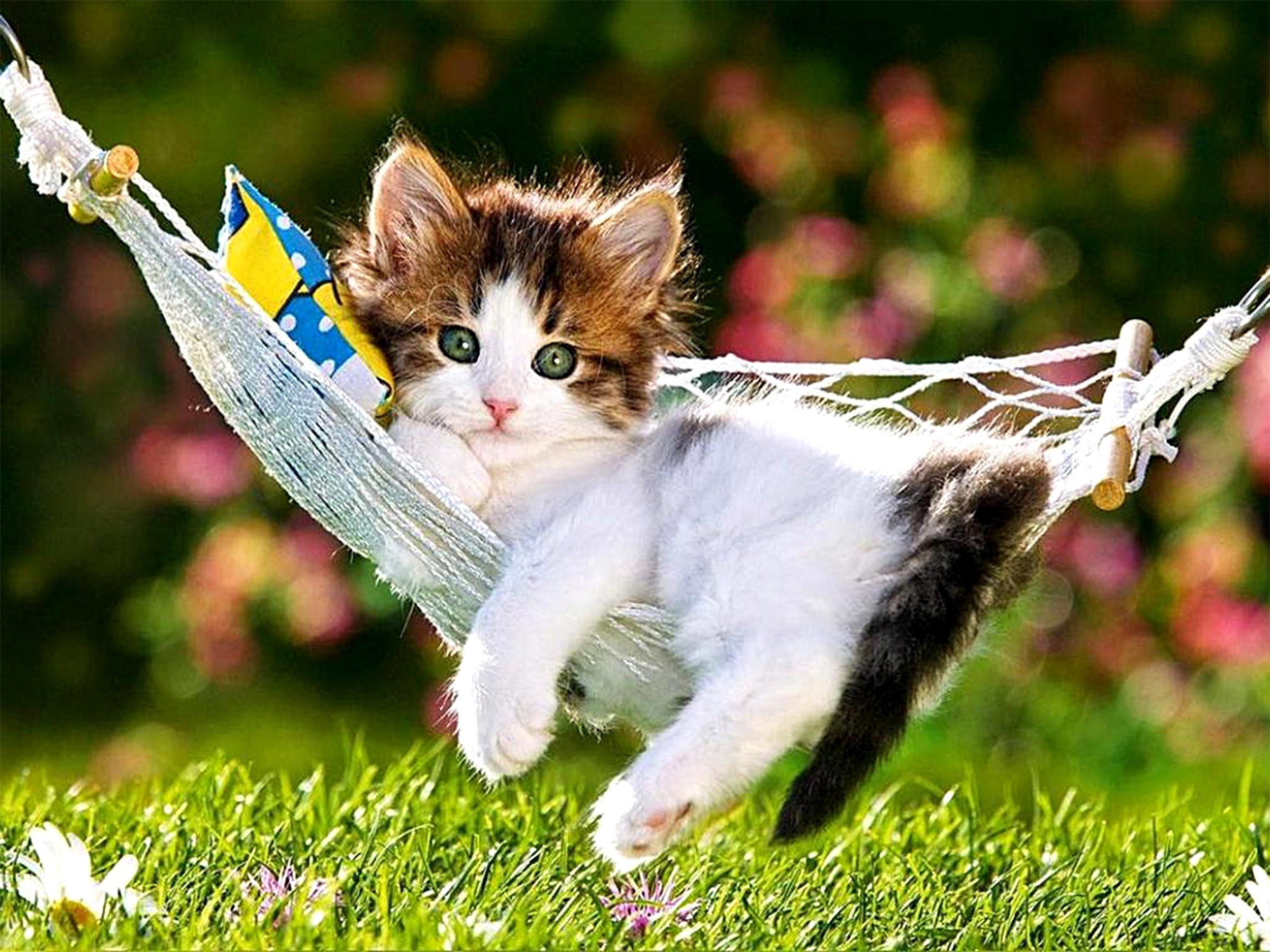 wallpaper.wiki-beautiful-creative-cute-cat-kitty-kitten-with-flowers