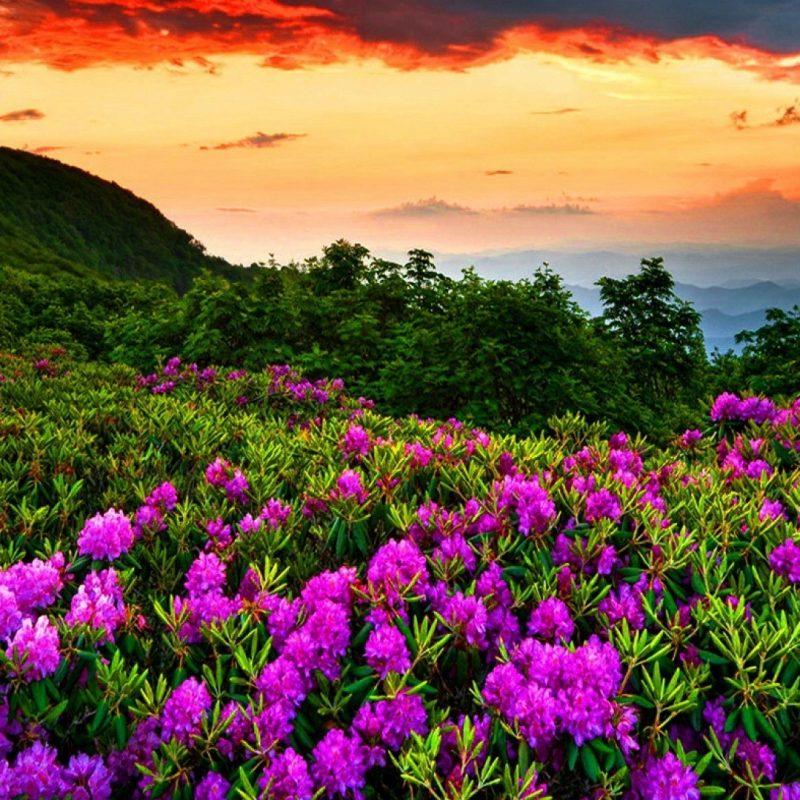 10 New Beautiful Nature Wallpaper Spring FULL HD 1080p For PC Desktop 2021 free download wallpaper wiki beautiful nature spring photos hd pic wpe0014473 800x800