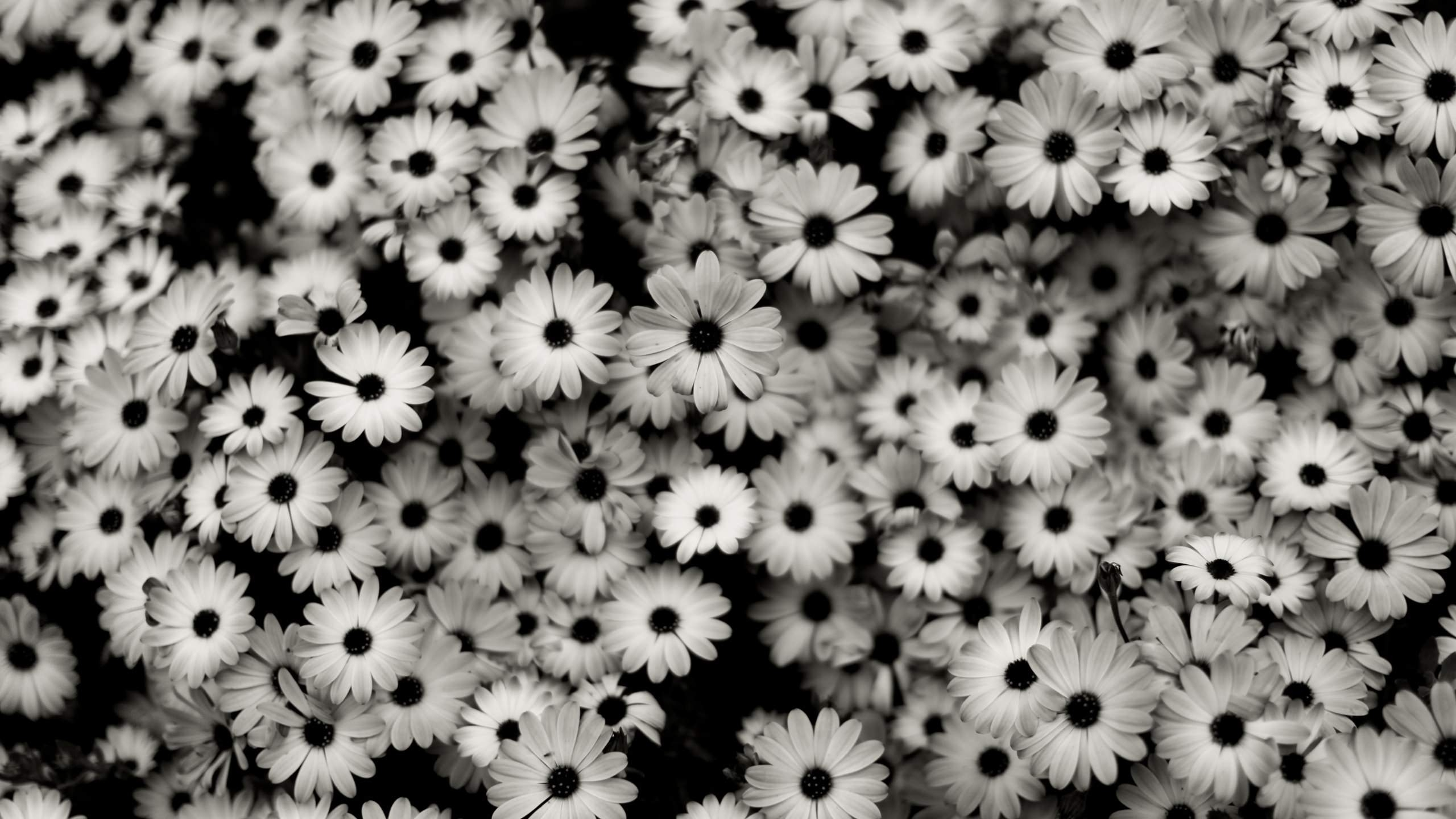 Title Wallpaperwiki Fascinating Black And White Floral Wallpaper Pic Dimension 2560 X 1440 File Type JPG JPEG