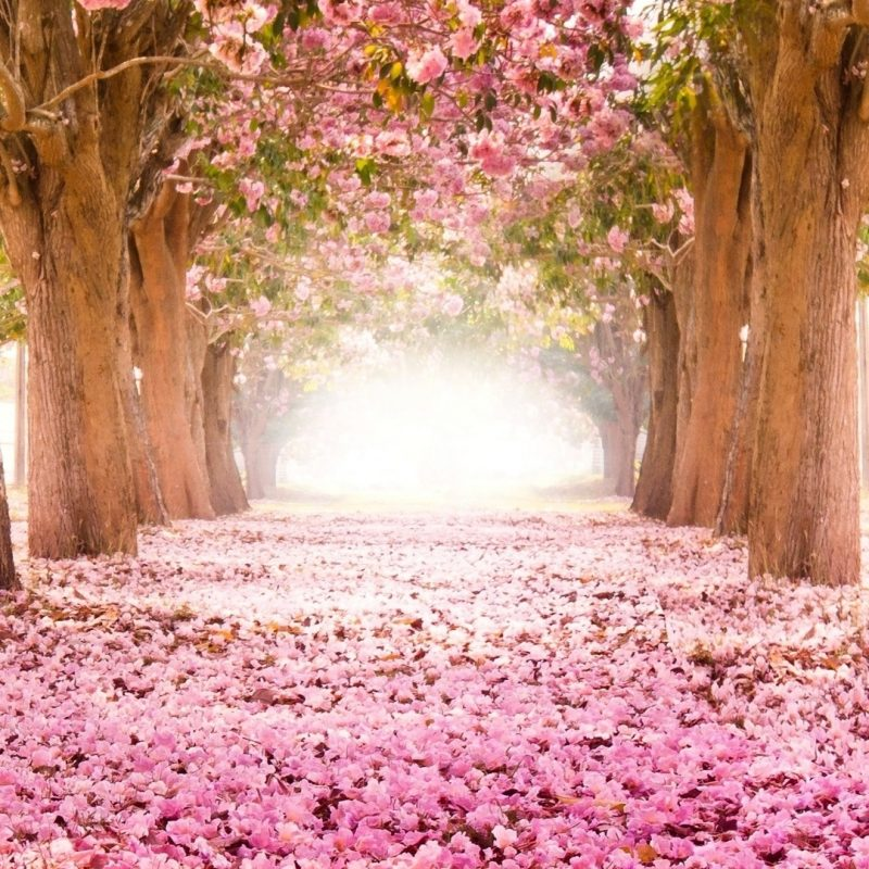 10 Latest Cherry Blossom Wallpaper Iphone FULL HD 1920×1080 For PC Desktop 2020 free download %name