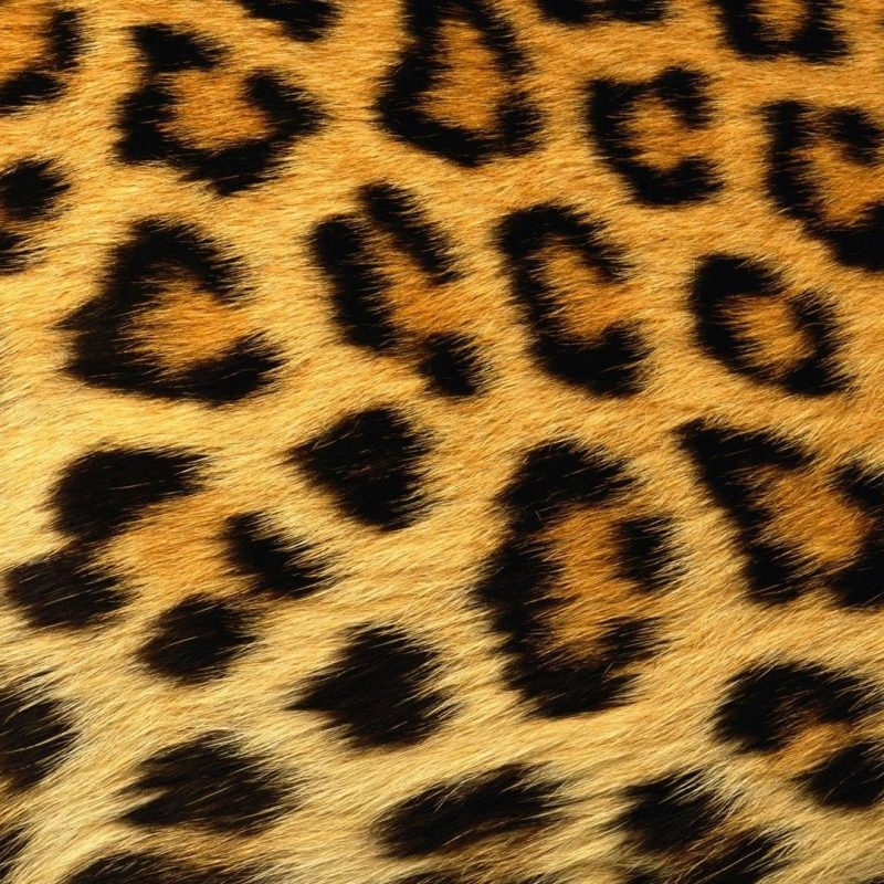 10 New Leopard Print Wallpaper Hd FULL HD 1080p For PC Background 2020 free download wallpaper wiki leopard print wallpaper 1920x1080 pic wpe003300 800x800