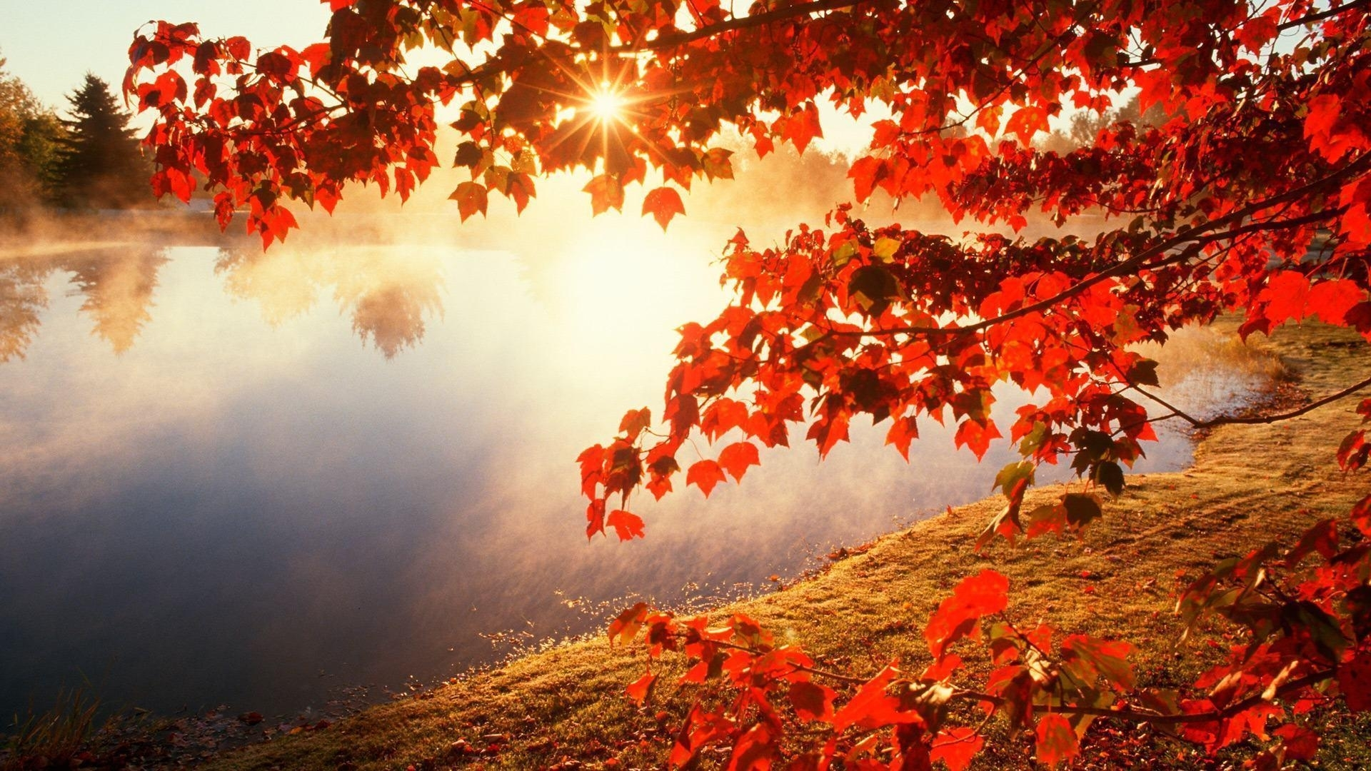 wallpapers autumn leaves - wallpaper cave