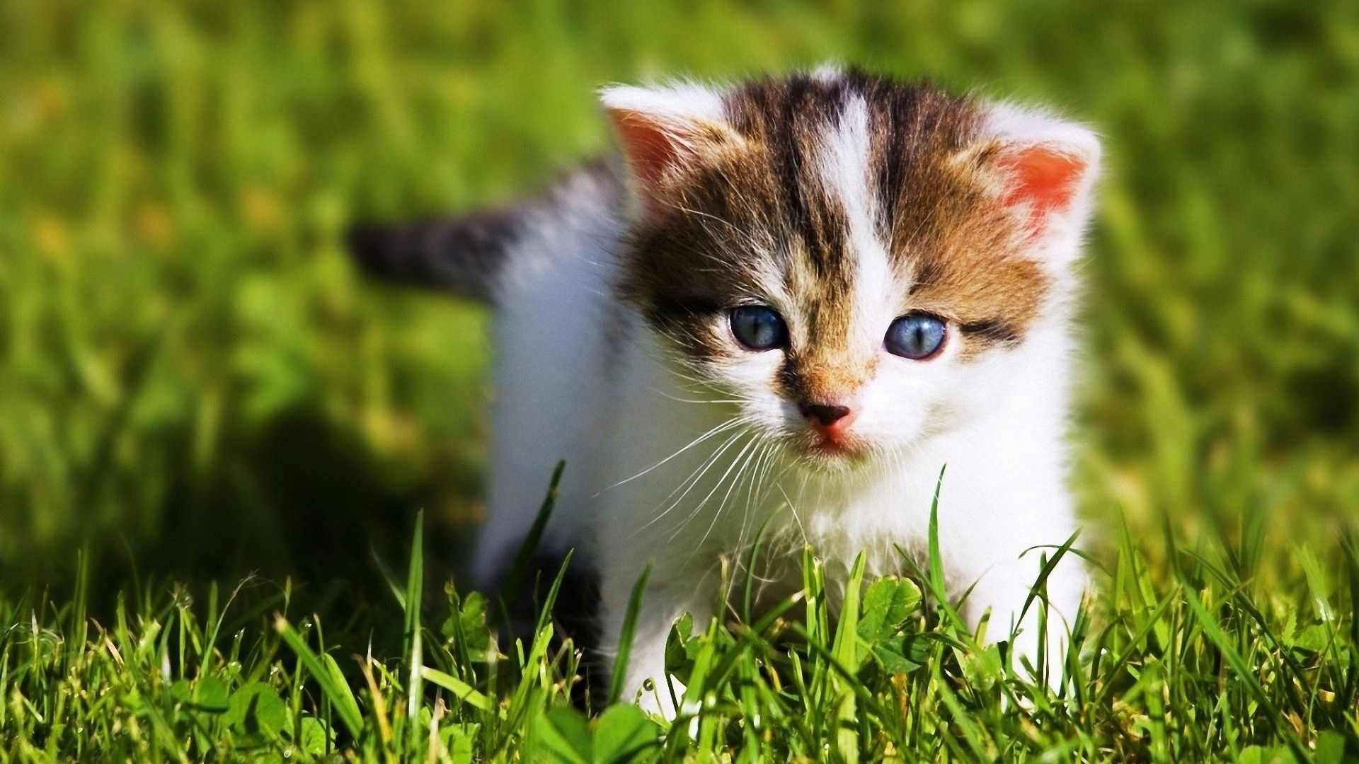 wallpapers baby animals group (62+)