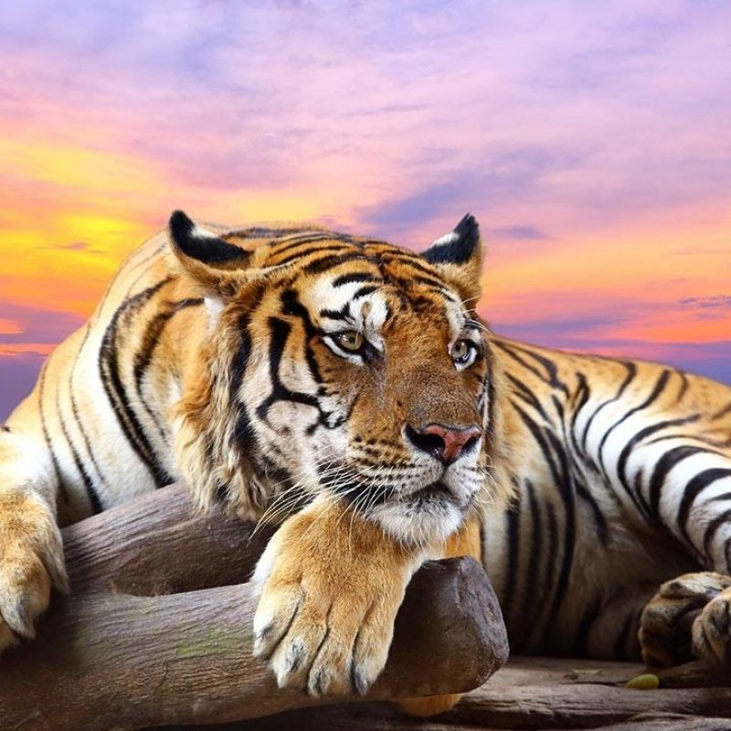10 Best Wild Animal Wall Paper FULL HD 1080p For PC Desktop 2018 free download wallpapers collection animals wallpapers 800x800