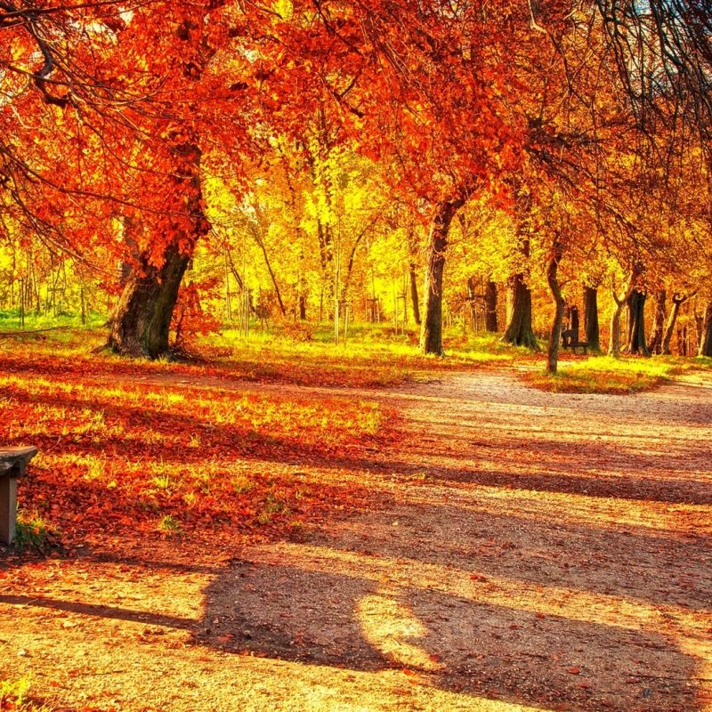 10 Top Fall Colors Wallpaper Background FULL HD 1920×1080 For PC Desktop 2020 free download wallpapers collection autumn leaves wallpapers 4 800x800